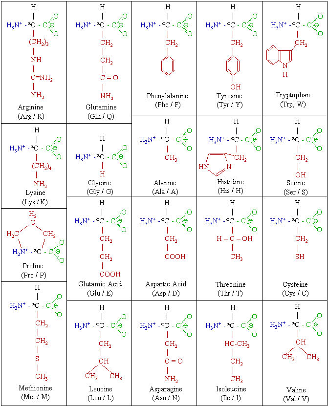 Amino acids chemical rep.png
